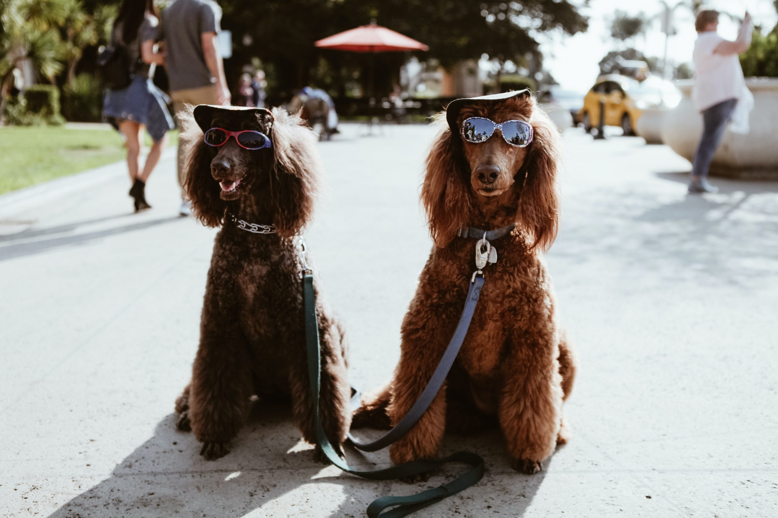 3MM: Achilles, Dogs & Yoghurt